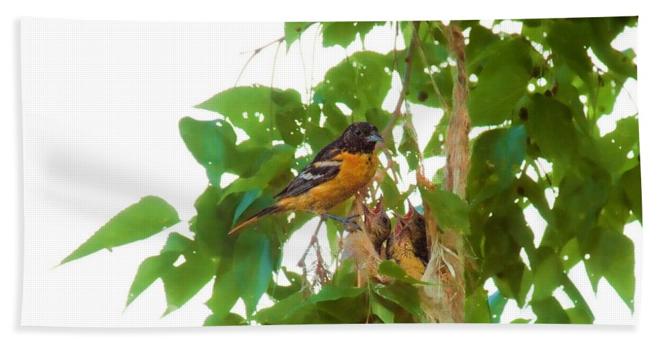 Orchard Oriole Bath Sheet featuring the photograph Oriole And Babies by David Arment