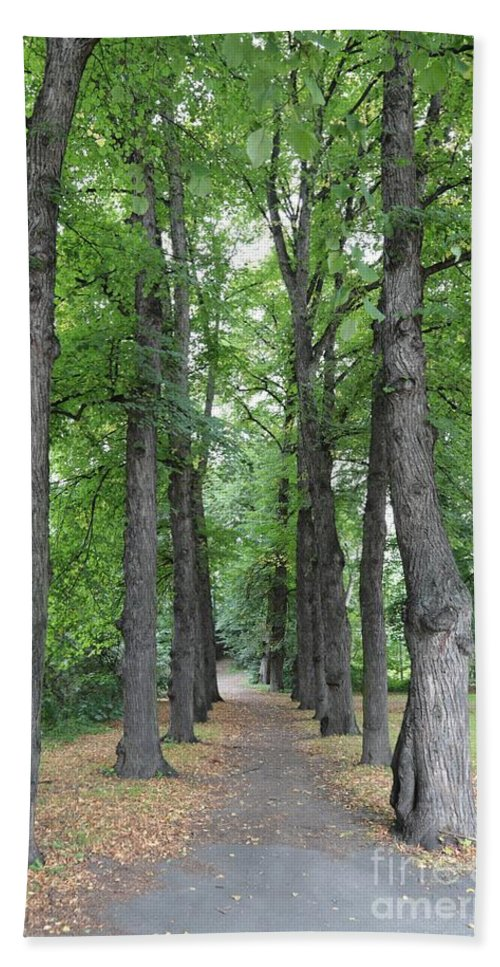 Trees Hand Towel featuring the photograph Oslo Trees by Carol Groenen