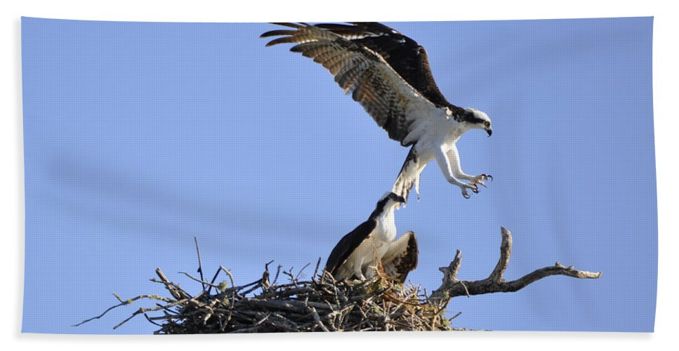 Osprey Bath Towel featuring the photograph Osprey Coming in for a Landing by Christine Stonebridge