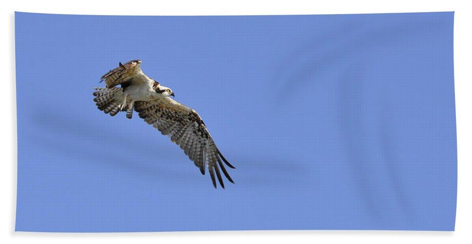 Osprey Bath Towel featuring the photograph Osprey in Flight by Christine Stonebridge
