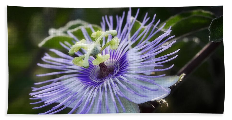 Passion Flower Bath Sheet featuring the photograph Out Of This World by Saija Lehtonen