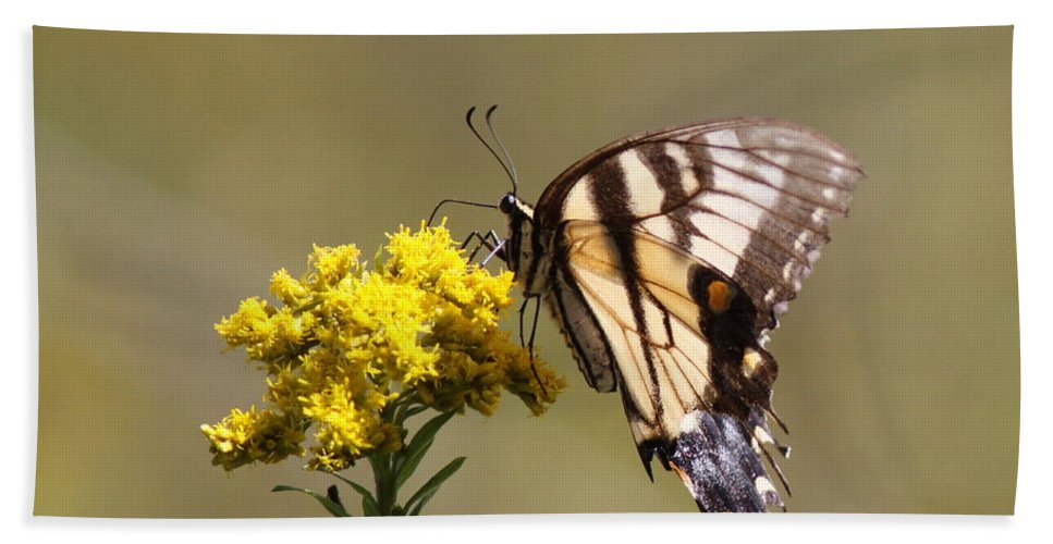 Swallowtail Butterfly Bath Sheet featuring the photograph Outstanding by Travis Truelove