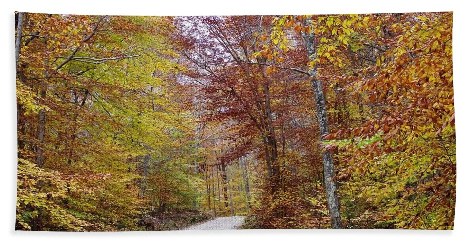 Connecticut State Forest. Autumn Woods Hand Towel featuring the photograph Pachaug State Forest by Michelle Welles