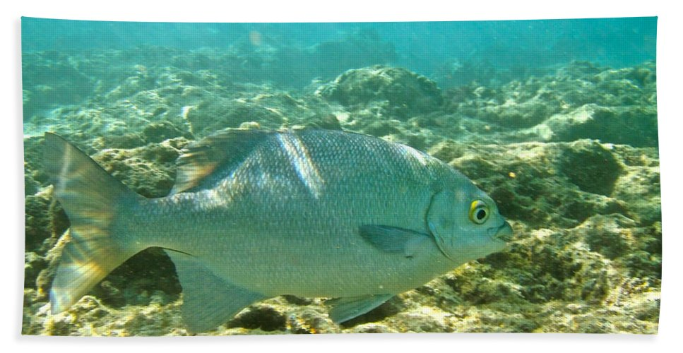 Pacific Chub Bath Sheet featuring the photograph Pacific Chub 1080113.jpg by Michael Peychich