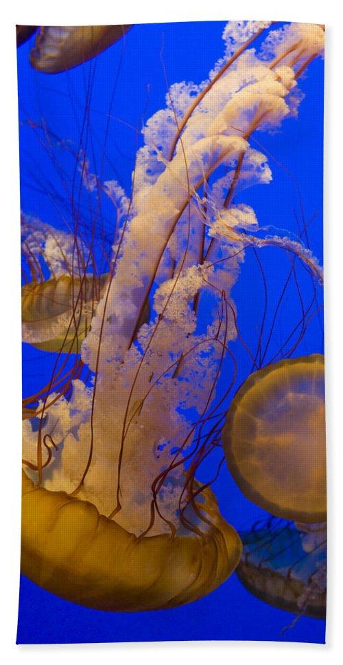 Mp Hand Towel featuring the photograph Pacific Sea Nettle Chrysaora Fuscescens by Suzi Eszterhas