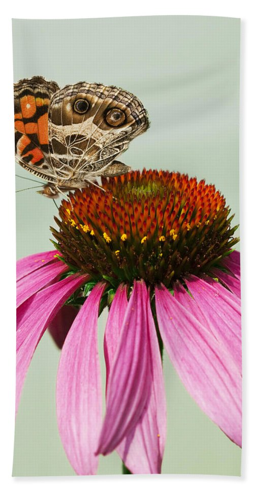 Painted Bath Sheet featuring the photograph Painted Lady Butterfly by Kathy Clark