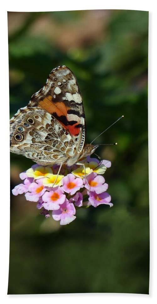 Painted Lady Bath Sheet featuring the photograph Painted Lady by Randall Ingalls