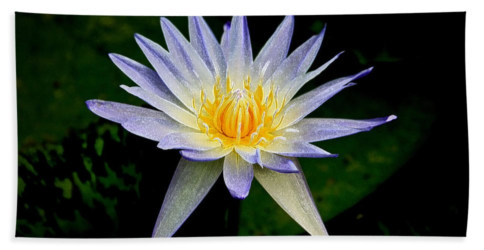 Flowers Hand Towel featuring the photograph Painted Lily And Pads by Steve McKinzie