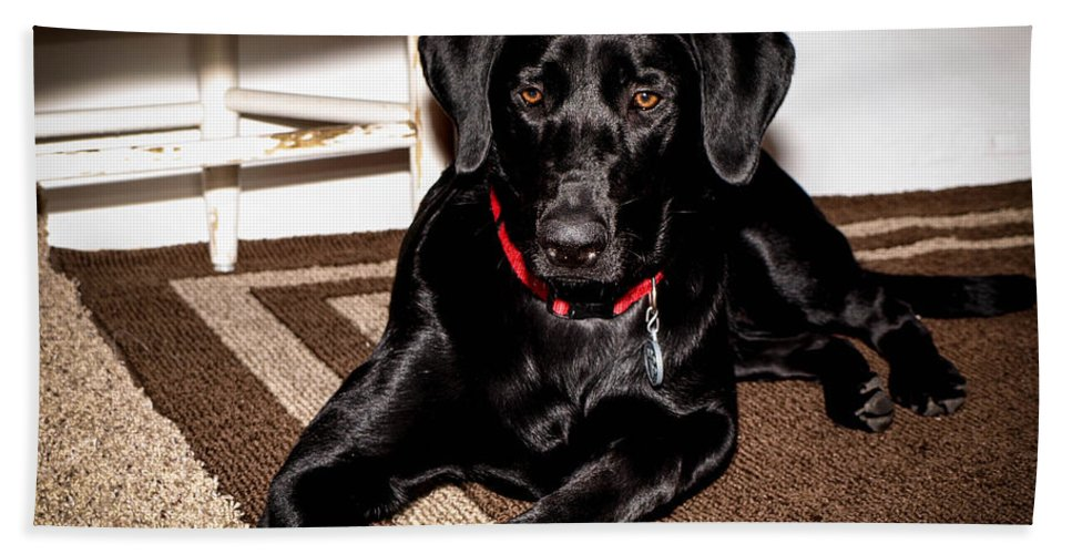 Dog Hand Towel featuring the photograph Paisley by Cathy Smith