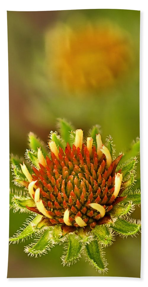 2012 Bath Sheet featuring the photograph Pale Purple Coneflower Bud by Robert Charity