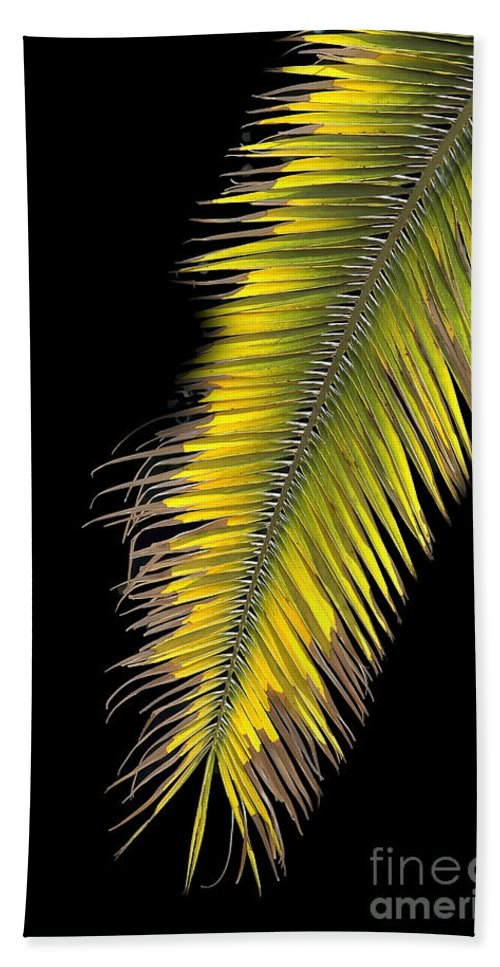 Palm Bath Sheet featuring the photograph Palm Frond Against Black by Mike Nellums