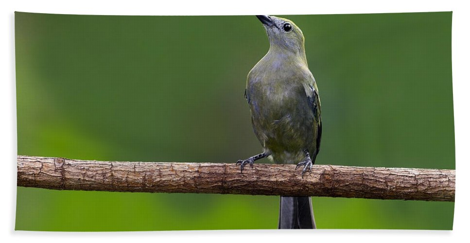 Palm Tanager Hand Towel featuring the photograph Palm Tanager by Tony Beck
