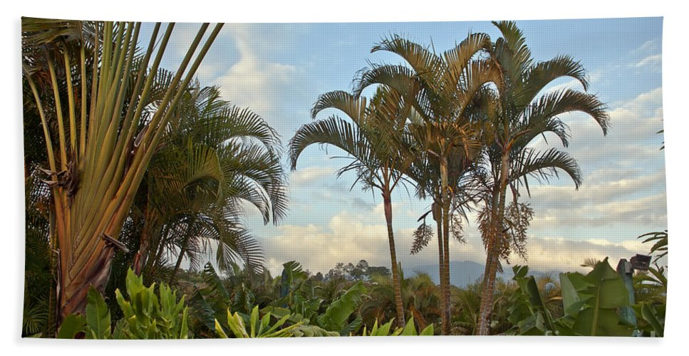 Palm Bath Sheet featuring the photograph Palms In Costa Rica by Madeline Ellis