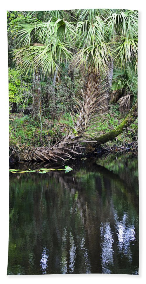 Palm Trees Bath Sheet featuring the photograph Palms On The River by Carolyn Marshall