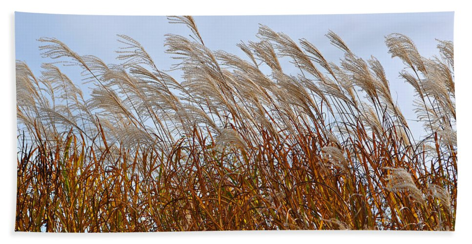 Pampas Grass Bath Sheet featuring the photograph Pampas Grass In The Wind 1 by Mary Machare