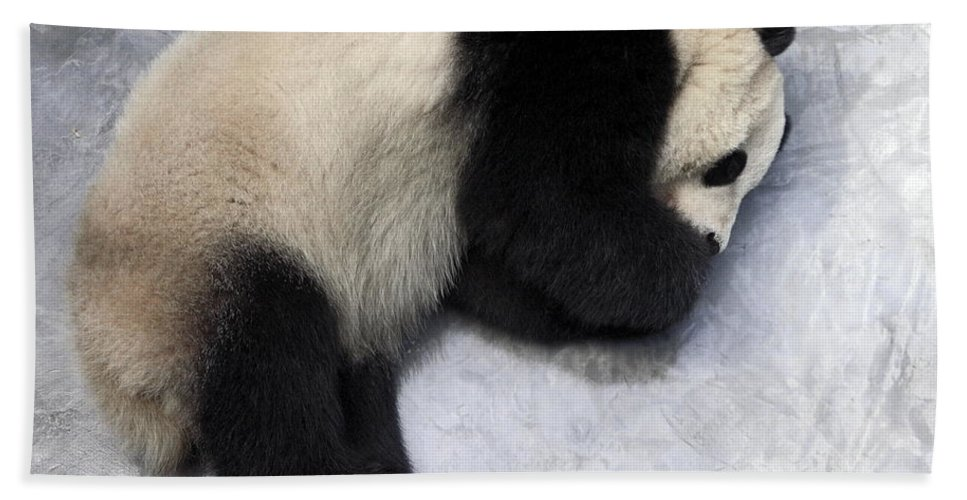 Giant Panda Bear Lying On Ground Bath Sheet featuring the photograph Panda Paws by Sally Weigand