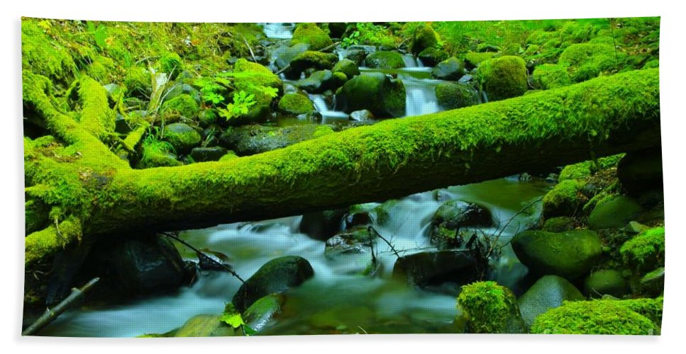 Water Hand Towel featuring the photograph Paradise Of Mossy Logs And Slow Water  by Jeff Swan