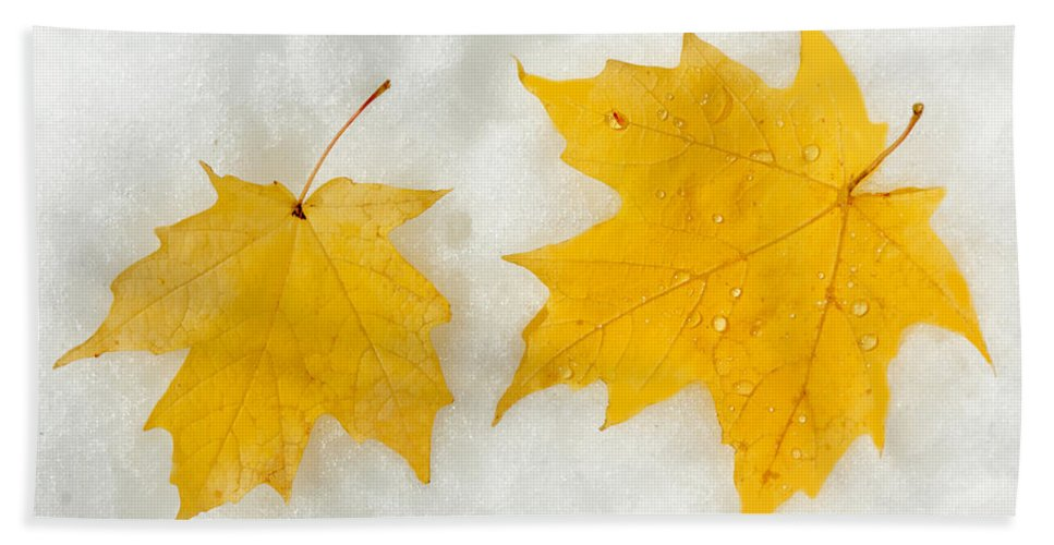 Fall Bath Sheet featuring the photograph Partners Till The End by Greg Fortier