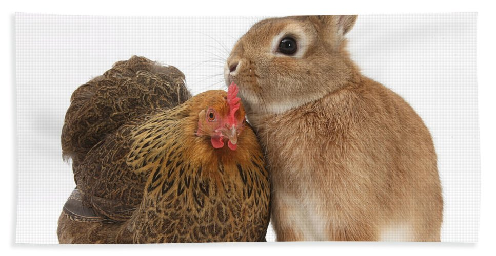 Nature Hand Towel featuring the photograph Partridge Pekin Bantam With Rabbit by Mark Taylor