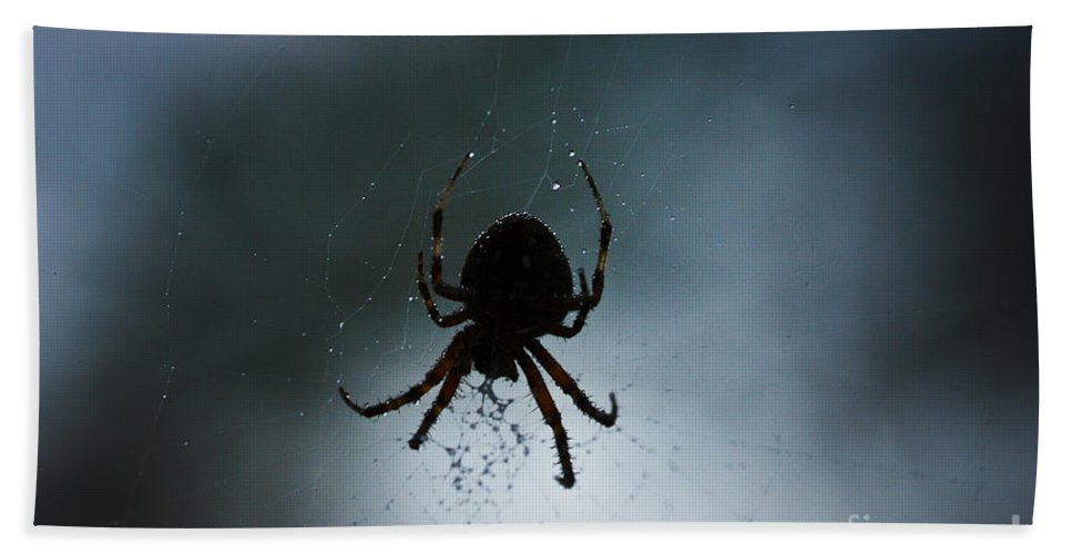 Spiders Bath Sheet featuring the photograph Pass The Towel by Kim Henderson