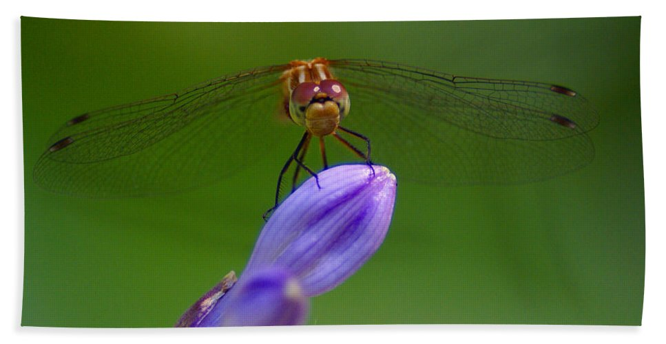 Dragonflies Hand Towel featuring the photograph Peaceful Afternoon by Ben Upham III
