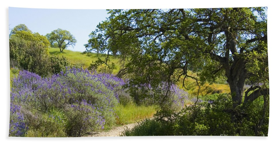 Knights Ferry Hand Towel featuring the photograph Peaceful Path by Jim And Emily Bush