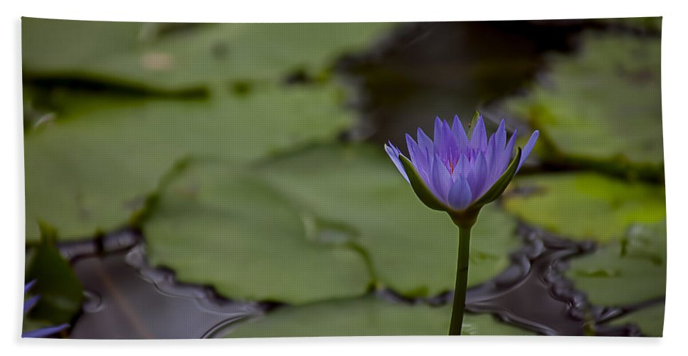 Purple Waterlily Bath Sheet featuring the photograph Peaceful Waterlily by Garry Gay