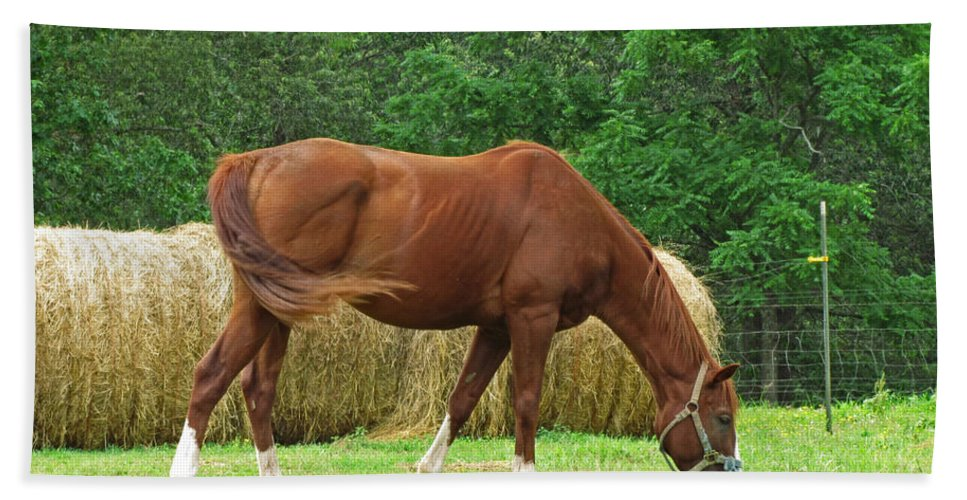 Bath Sheet featuring the photograph Peacefully Grazing by Debbie Portwood