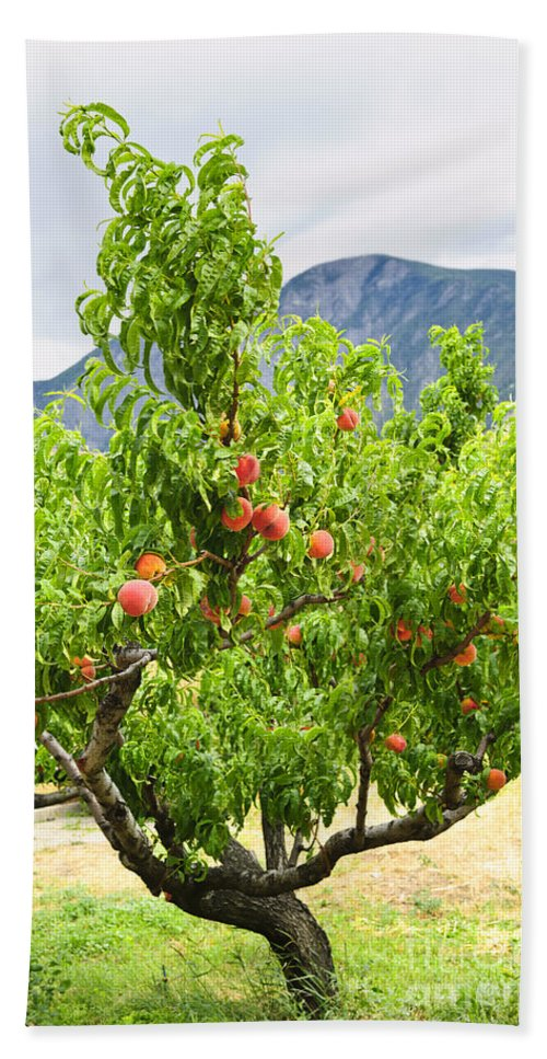 Peaches Hand Towel featuring the photograph Peaches On Tree by Elena Elisseeva