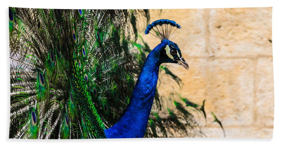 Animal Hand Towel featuring the photograph Peacock by Michael Goyberg