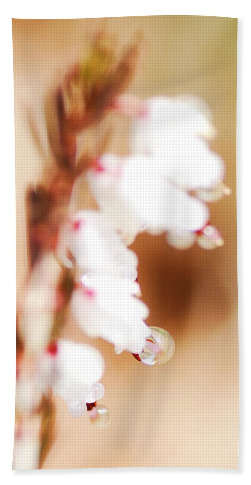 Dewdrops Hand Towel featuring the photograph Pearls In The Wind by Susan Capuano
