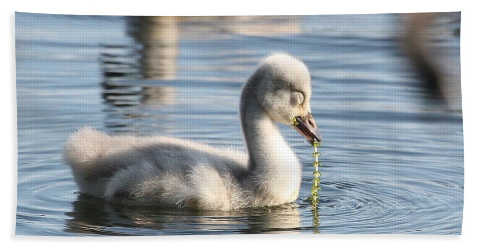 Cygnet Hand Towel featuring the photograph Pearls Of Innocence by Teresa McGill