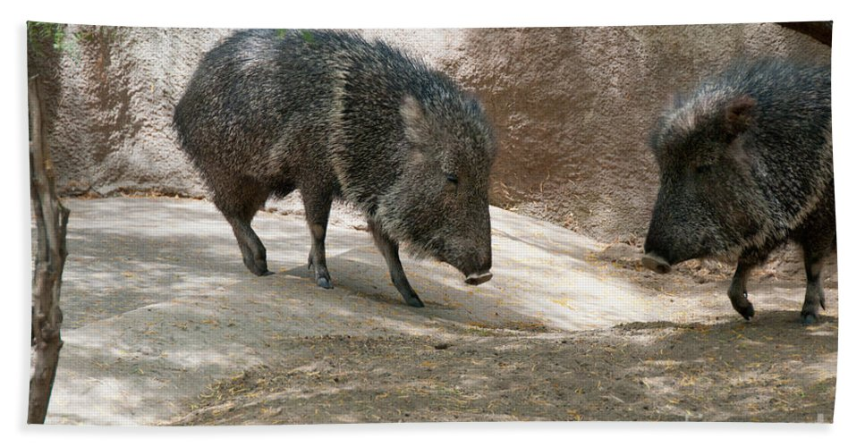 California Bath Sheet featuring the digital art Peccary by Carol Ailles