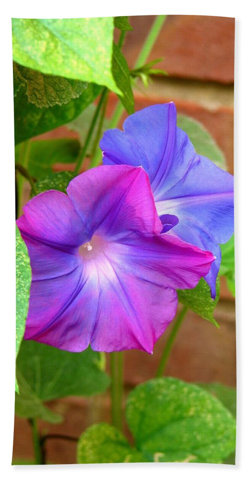 Morning Bath Sheet featuring the photograph Peek-a-boo Morning Glories by Carla Parris