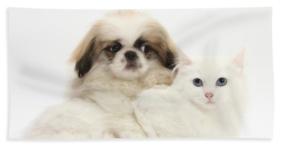 Animal Hand Towel featuring the Pekinese Puppy And Maine Coon-cross by Mark Taylor