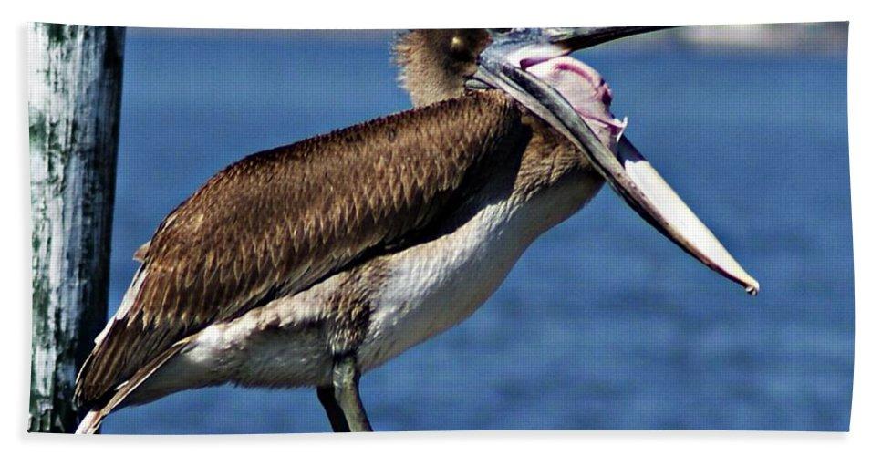 Pelican Bath Sheet featuring the photograph Pelican I by Joe Faherty