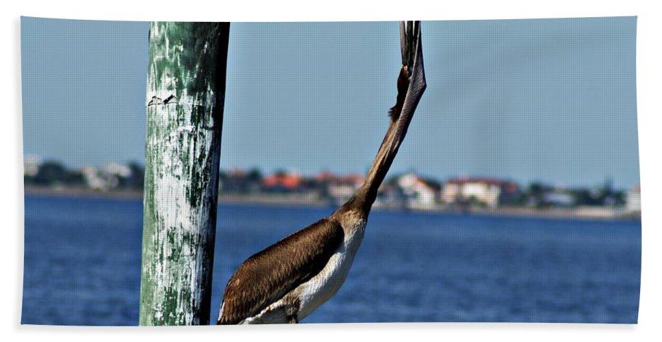 Pelican Bath Sheet featuring the photograph Pelican IIi by Joe Faherty
