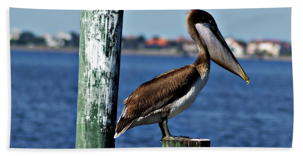Pelican Bath Sheet featuring the photograph Pelican Iv by Joe Faherty