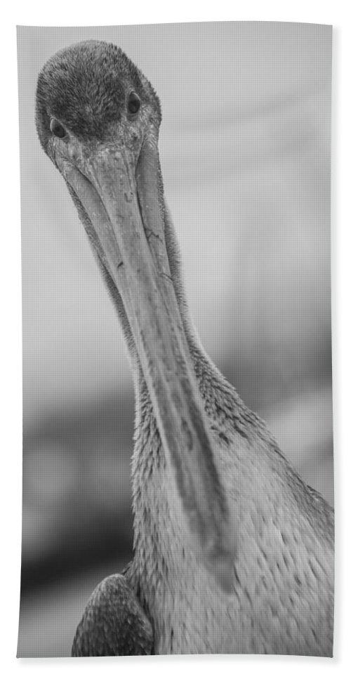 Pelican Bath Sheet featuring the photograph Pelican by Ralf Kaiser