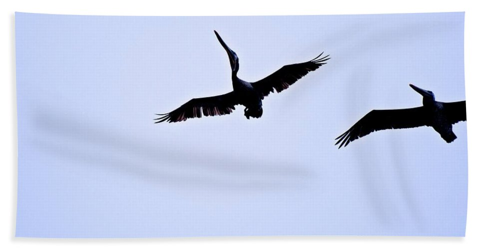 Brown Pelican Hand Towel featuring the photograph Pelican Stalling by Eric Tressler