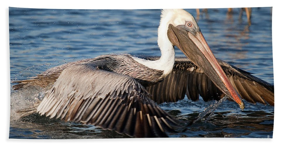 Pilican Hand Towel featuring the photograph Pelican Take Off by TJ Baccari