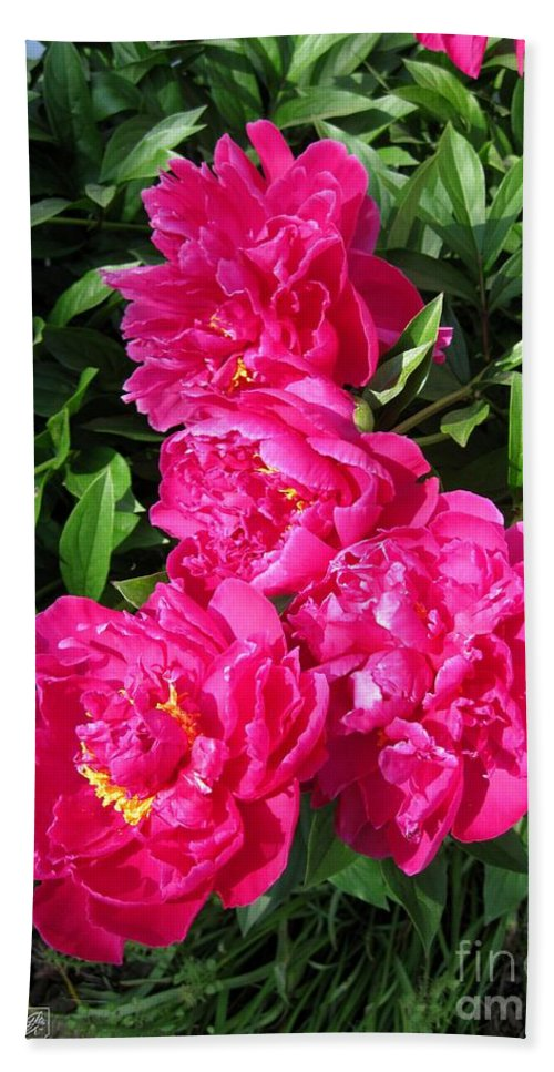 Peony Hand Towel featuring the photograph Peony Named Karl Rosenfield by J McCombie