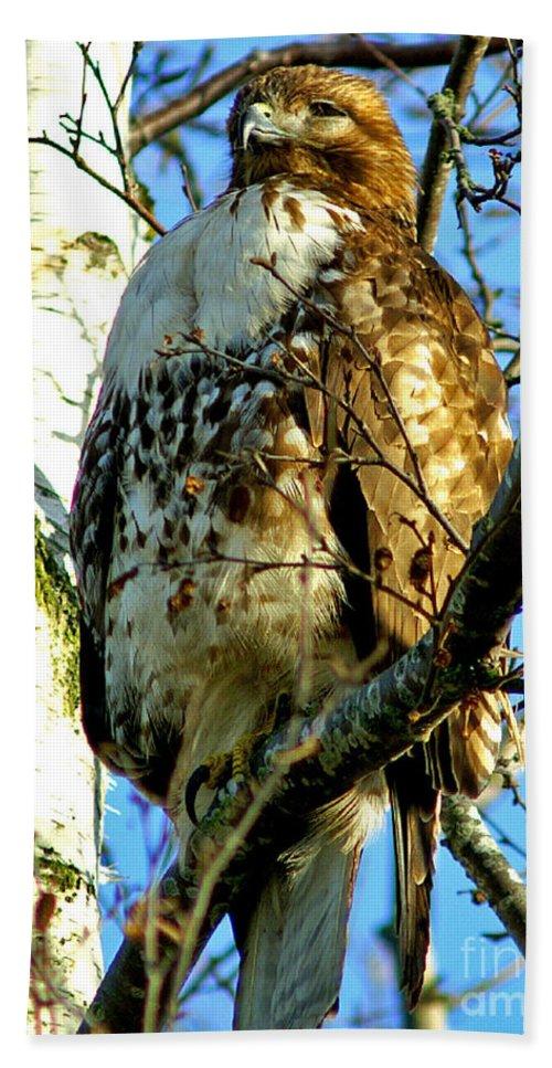 Hawks Bath Sheet featuring the photograph Perched Hawk by Randy Harris