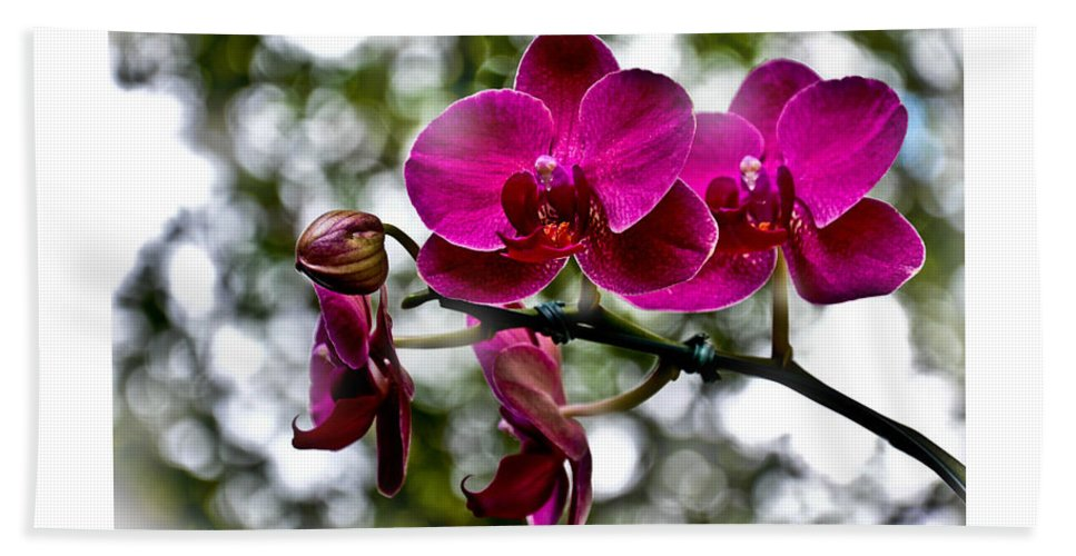Phalaenopsis Bath Sheet featuring the photograph Phalaenopsis by Aline Siqueira