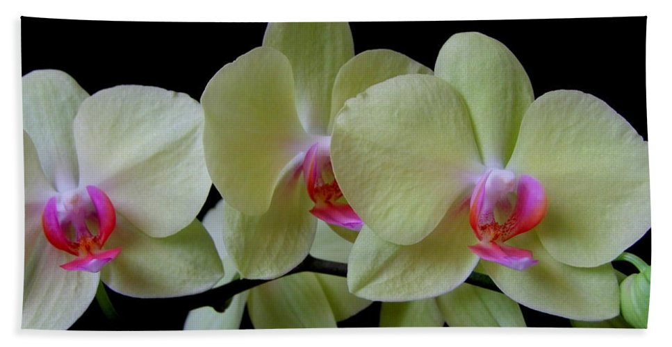 Orchid Bath Sheet featuring the photograph Phalaenopsis Fuller's Sunset Orchid No 1 by Mary Deal