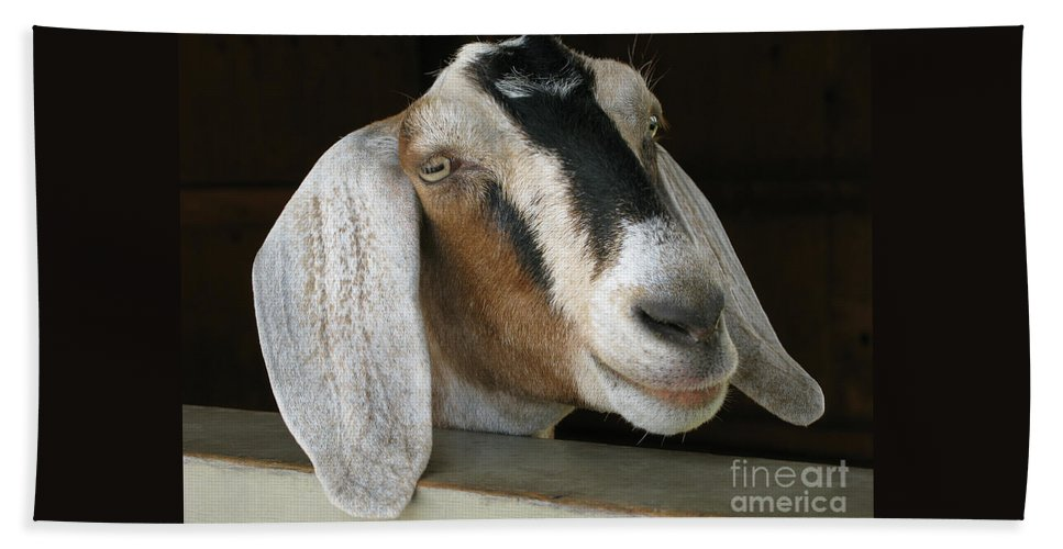 Goat Bath Towel featuring the photograph Photogenic Goat by Ann Horn