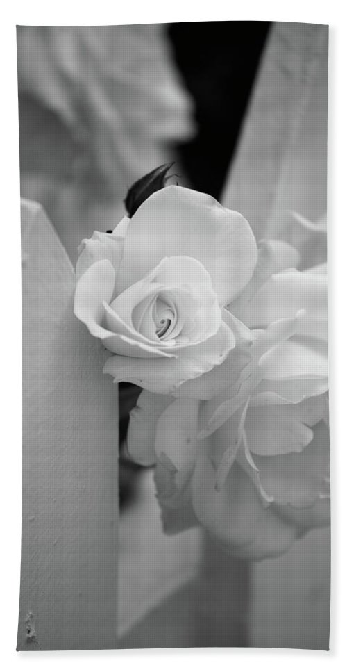 Black & White Bath Sheet featuring the photograph Picket Rose by Peter Tellone