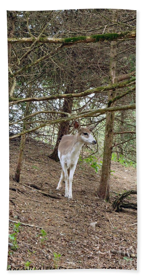 Deer Hand Towel featuring the photograph Piebald by Art Dingo