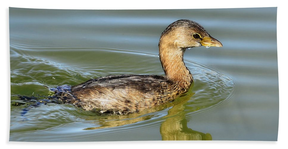 Pied-billed Grebe Bath Towel featuring the photograph Pied-billed Grebe by Saija Lehtonen