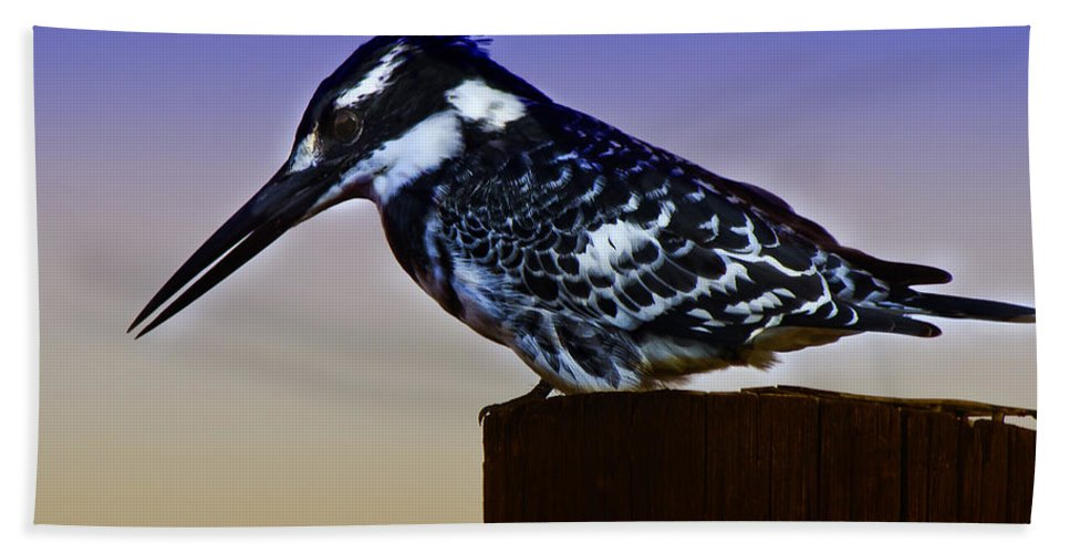Pied Kingfisher Bath Sheet featuring the photograph Pied Kingfisher by Ronel Broderick